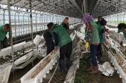 우곡면 새마을지도자협, 피해농가 일손돕기
