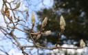 어김없이 봄은 찾아온다