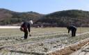 봄은 마늘밭으로부터 온다